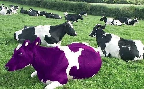 La mucca viola nel curriculum vitae - Lavora con noi Italia